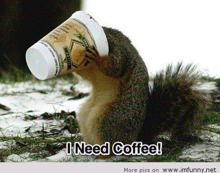 wiewiórka pijąca kawę