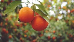 sok pomarańczowy Hortex