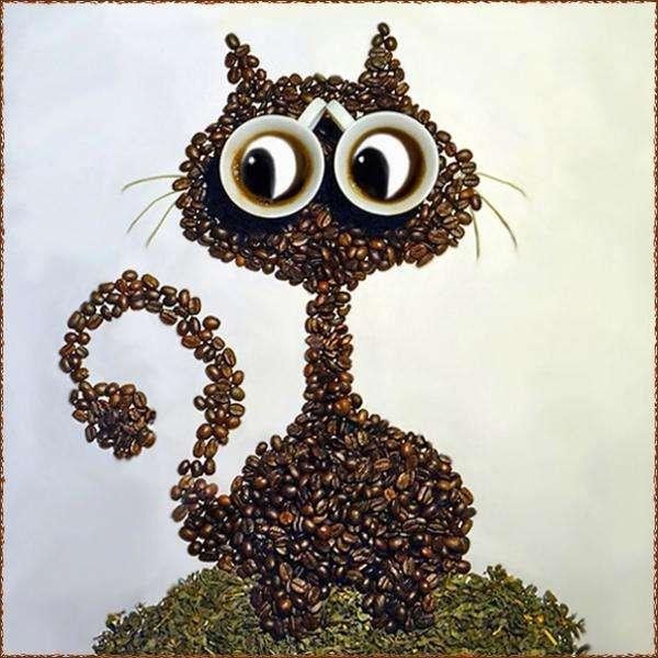 kot z ziarna kawy
