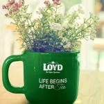 Herbata Loyd – krótki przegląd