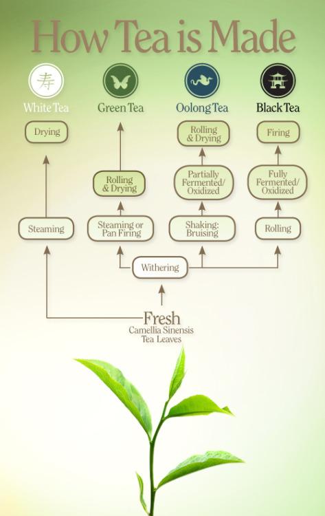 jak się robi herbatę oolong