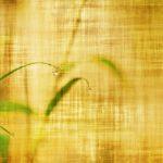 Bamboo tea…